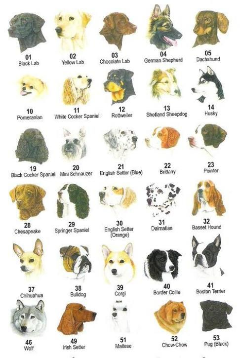 Akc Breeds Of Dogs Dog Breeders List
