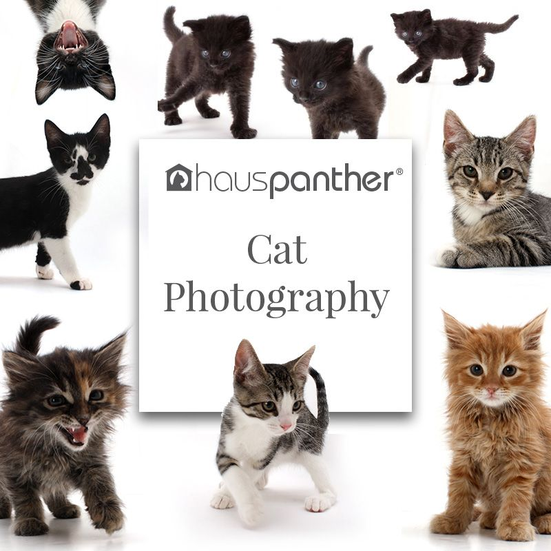 Who Doesn T Love Photos Of Cute Cats And Kittens Check Out Some Of Our Favorite Cat Photographers And Rea Cat Photography Cute Cats And Kittens Cats