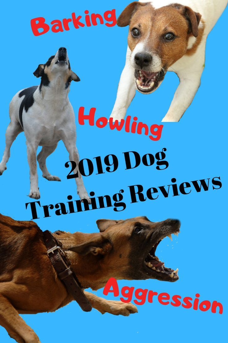 If You Thinking About Buying A Dog Training Program You Might Want