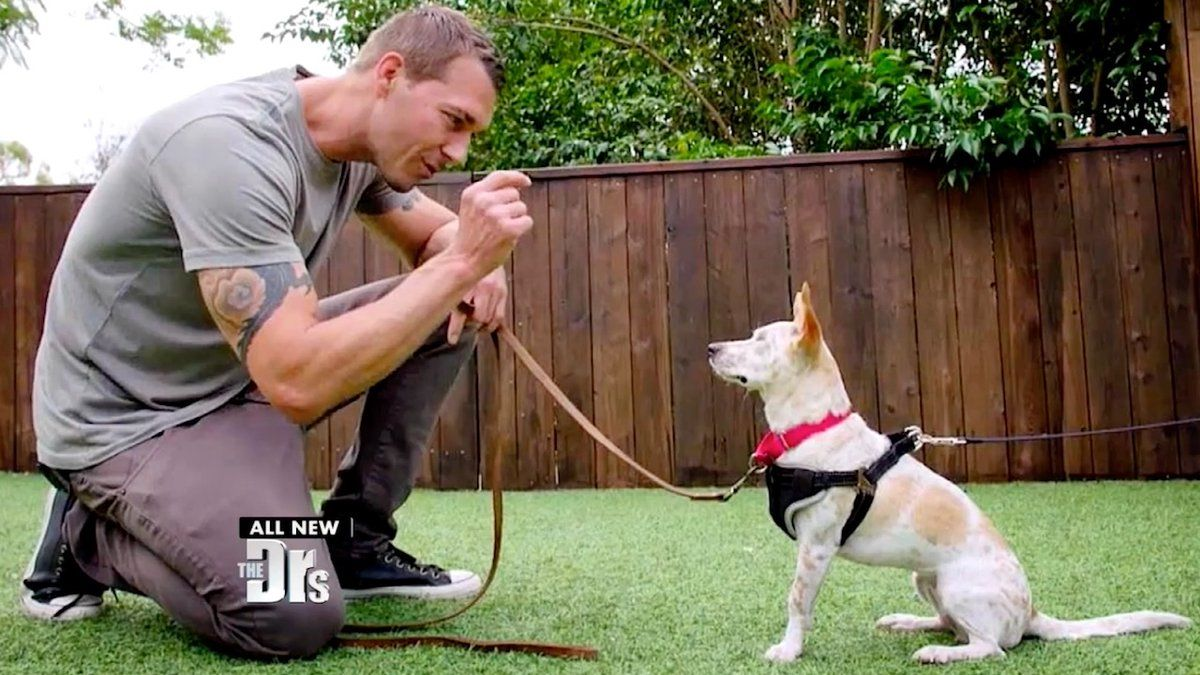 Brandon Mcmillan Joined The Hosts Of The Doctors To Give Them An