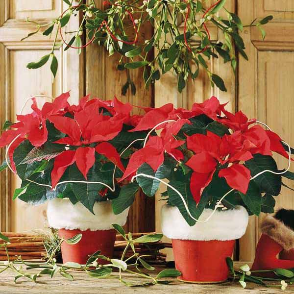 Christmas Table Decorations 17 Ideas For Holiday Table Decorating With Plants Christmas Table Decorations Christmas Centerpieces Holiday Table Decorations