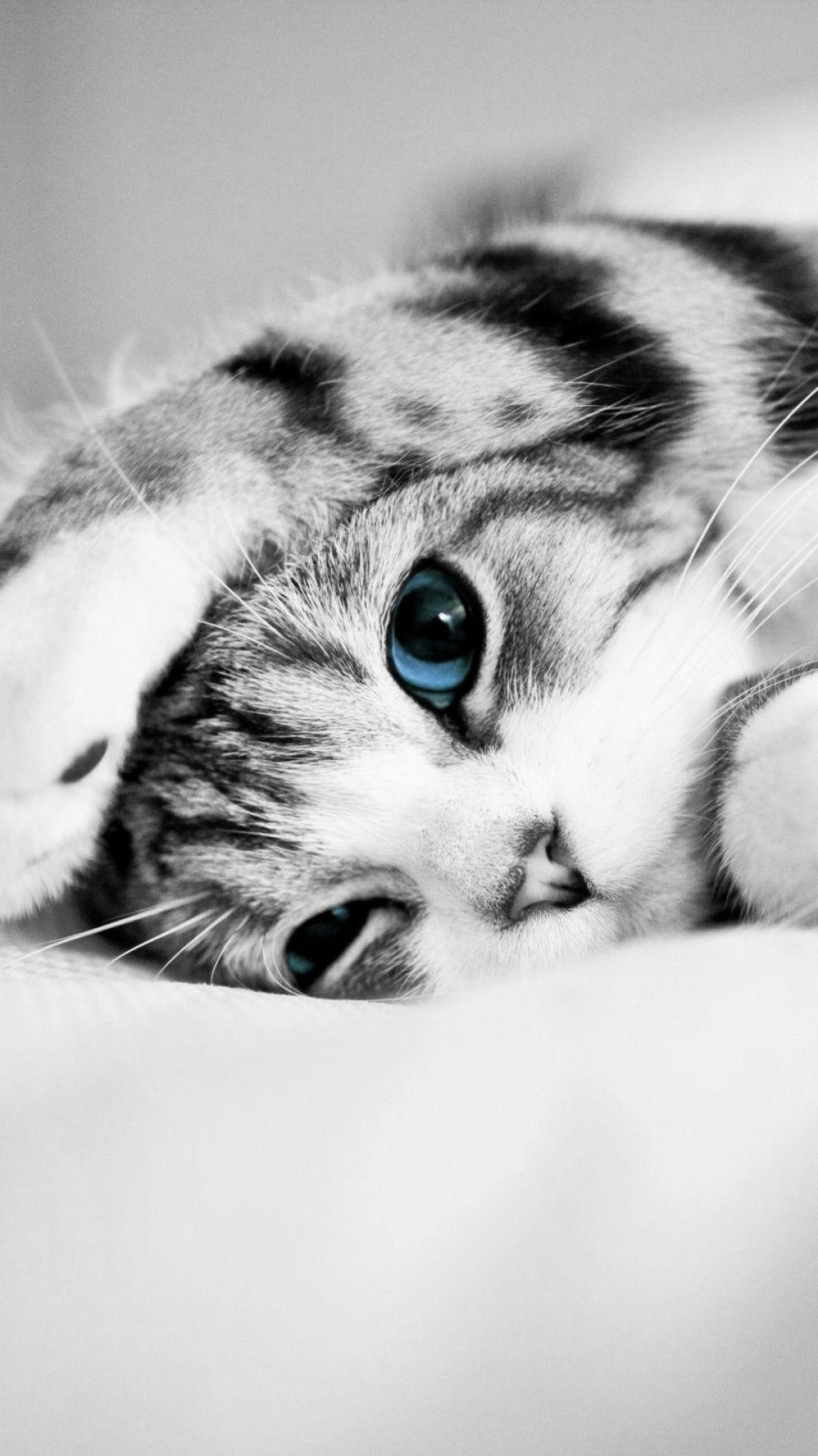 Cat Phone Wallpaper Самые милые животные, Кошки и котята