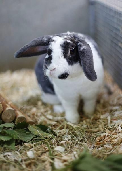 Möchtest du mich vielleicht aufnehmen? Kaninchen Oreo