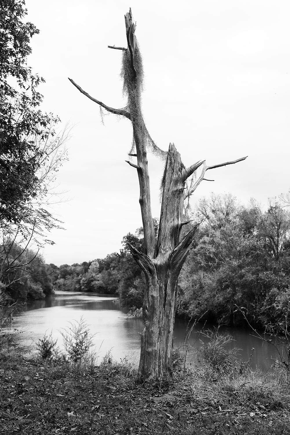 Barren tree with a river view black and white landscape