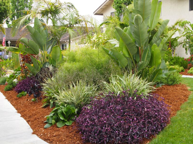 Purple Heart at the Beach Creek Apartments in San Diego. Landscape design  by Waterwise Botanicals - Purple Heart At The Beach Creek Apartments In San Diego. Landscape