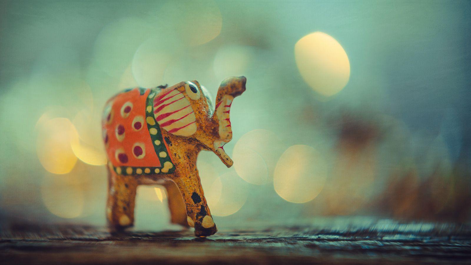 Elephant For Good Luck Con Imágenes Fondos De Pantalla