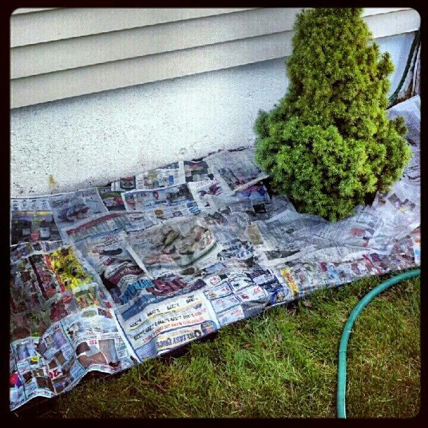 Use Newspaper In Flower Beds Instead Of Plastic Weed Mat It S Green Will Biodegrade And Turn Into Mulch Www Sweetlilyou