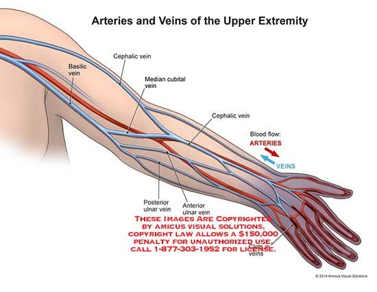 radial arm saw diagram arm veins diagram #4