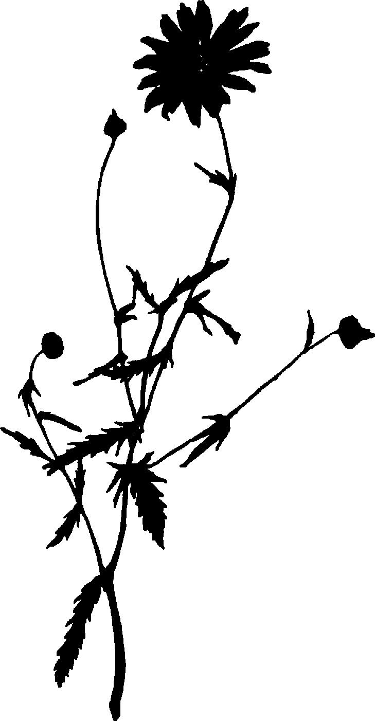 Sunflower Clipart Clip Art Clipart Black And White