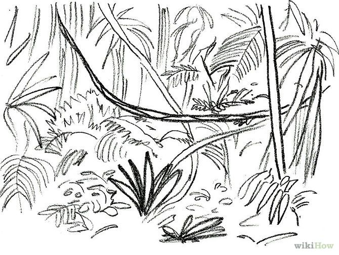 Line Art Jungle : Jungle rainforest plants drawing panther tattoo designs