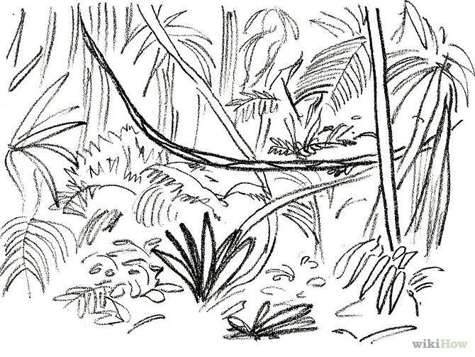 Rainforest Clipart Black And White