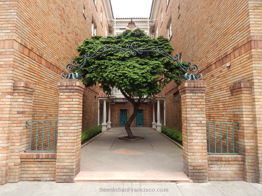tree in a courtyard, stanyan street, san francisco ~ Join the Seen In San Francisco Facebook group to share your SF photos and videos or to enjoy the pics and videos in your Facebook feed: https://facebook.com/groups/seeninsanfrancisco
