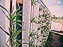 Photo of #Balkon #für #Garten #Gärtnern #Ideen #Ihren – My Blog