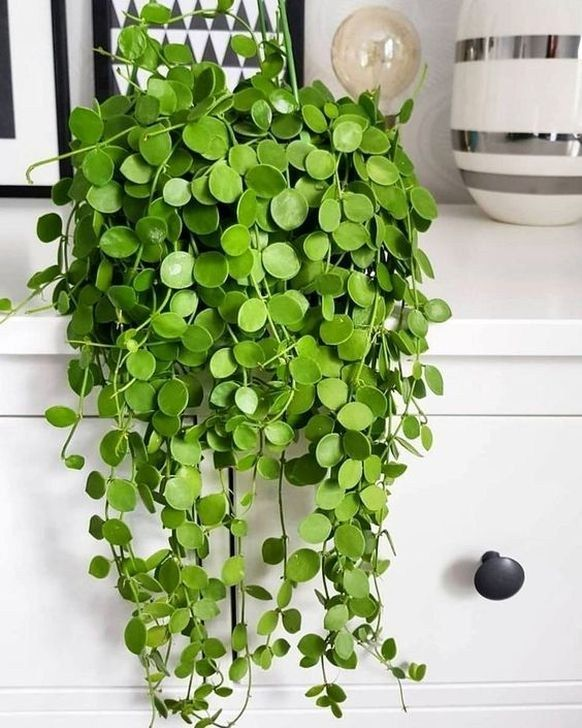 47 Beautiful Hanging Planter Ideas For Outdoor -   9 hanging plants Interieur ideas