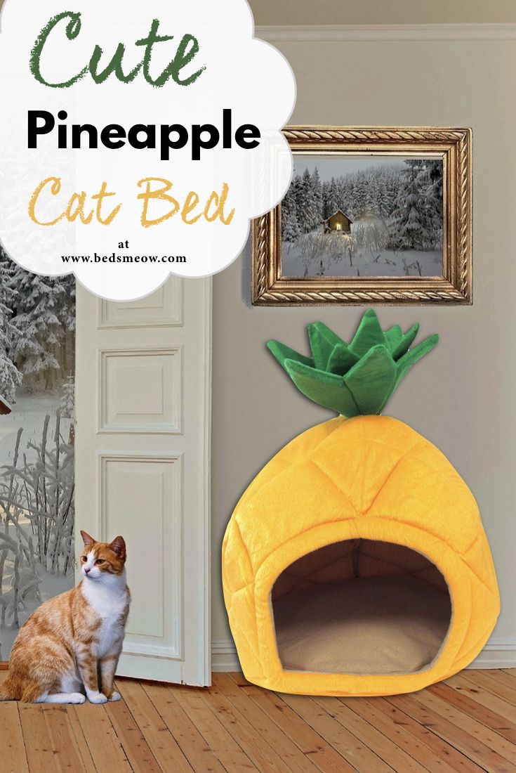Pineapple Cat Bed Cat bed, Cute pineapple, Cats