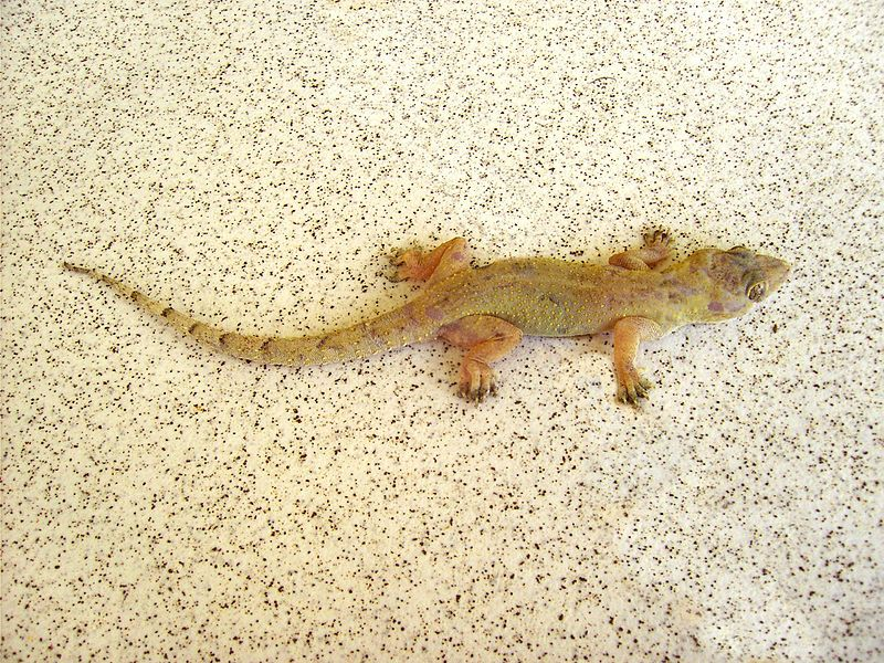 Bats Are Big Shrews Are Small But Geckos Are The Cutest Of All