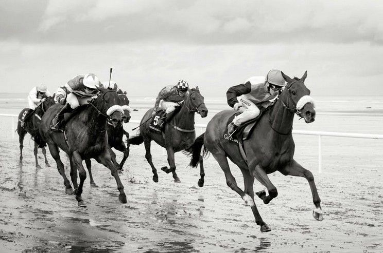 www.pegasebuzz.com | Equestrian photography : Amanda Lockhart