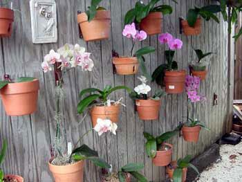 Flower Pot Clips For Fence   Google Search