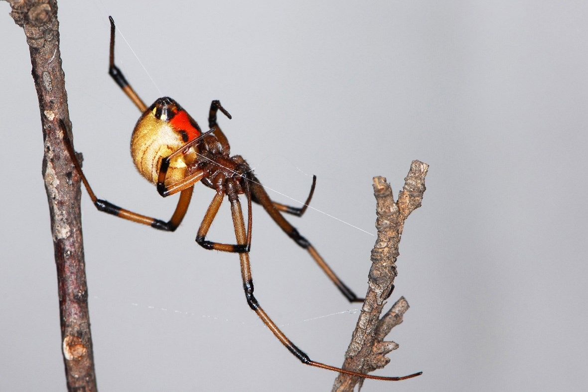 rare spiders and their names - HD1180×787