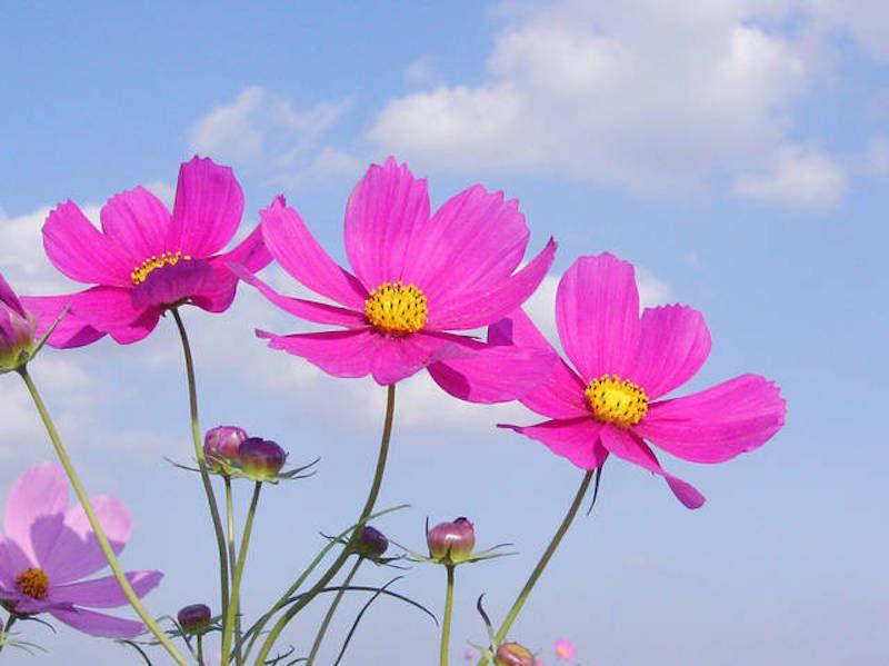 Japanese Plants Japanese Plants Plants Flowers