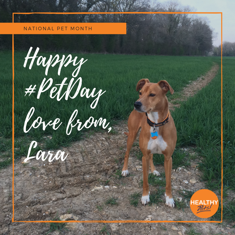 In Honour Of Petday We Asked Some Of Our Healthy Pets Employees To Share Their Pet Stories Here S The Story Of Leah And Healthy Pets Pet Day Animal Stories