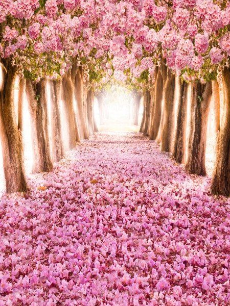 Romantic Flower Wedding Photo Background Studio Backdrop ...