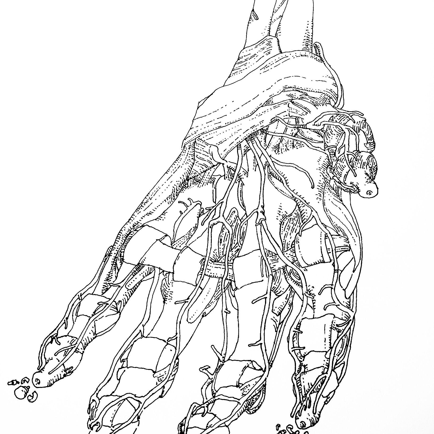 Study For Left Palm Hand Anatomy Ink Paper Pen Talos Cyborg