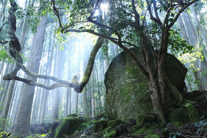 和歌山 美しき日本を再発見 和歌山のフォトジェニックな絶景スポット5選 Retrip リトリップ 和歌山 観光 和歌山 絶景