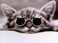 Kitten Daydream