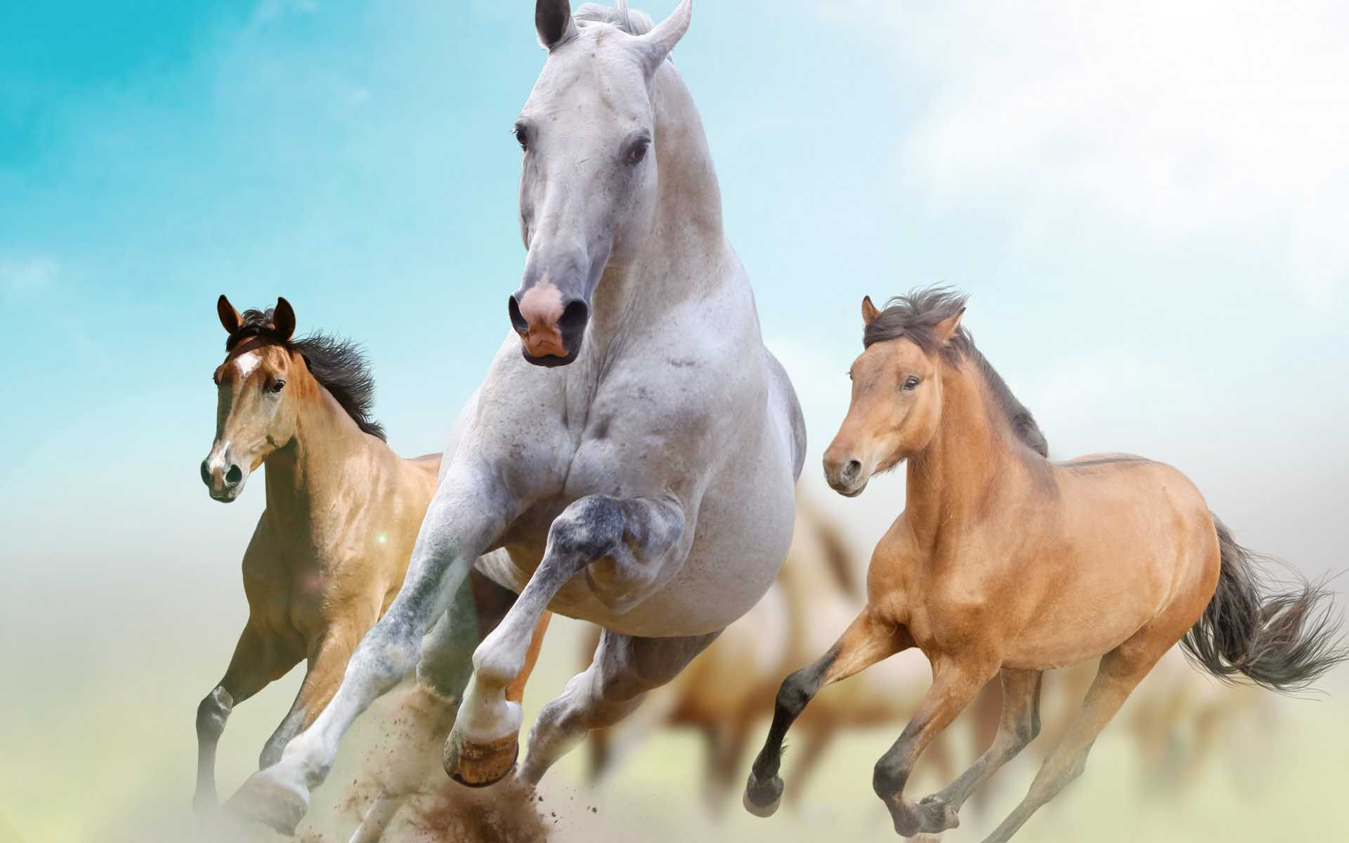 Beautiful Horses Wallpaper Find tall and beautiful