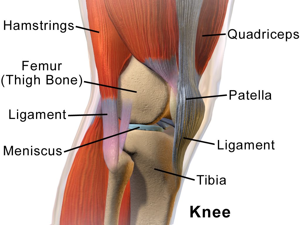 1000 images about knee join capsule on pinterest knee pain  : knee anatomy diagram - findchart.co
