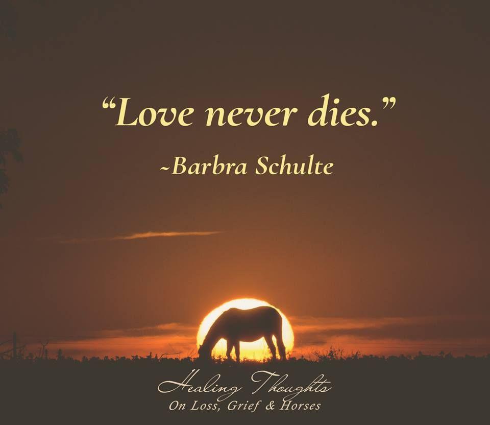 """""""Love Never Dies."""" -Barbra Schulte #healingthoughts #grief"""