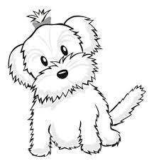 Image result for maltese puppy drawing (With images