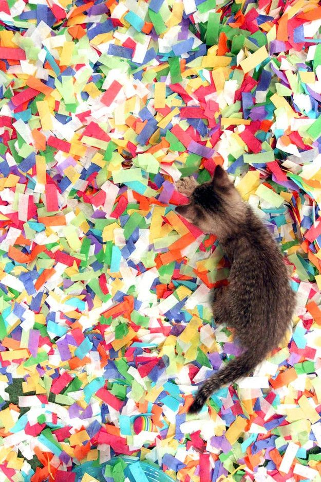 Kitten playing in confetti