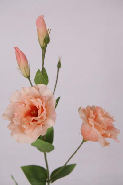 Peach lisianthus google search flowers pinterest for Lisianthus art floral