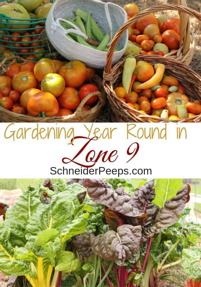 Zone 9 Gardening plus get planting tips by zone for zones 3-8 #howtogrowvegetables