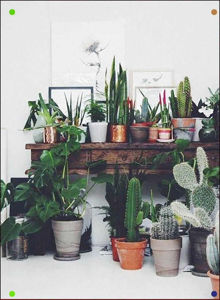 The French Bedroom Company Urband Jungle Bedroom We Re Loving The Interiors Trend Of House Plants F Plant Decor Indoor Easy House Plants Cactus House Plants