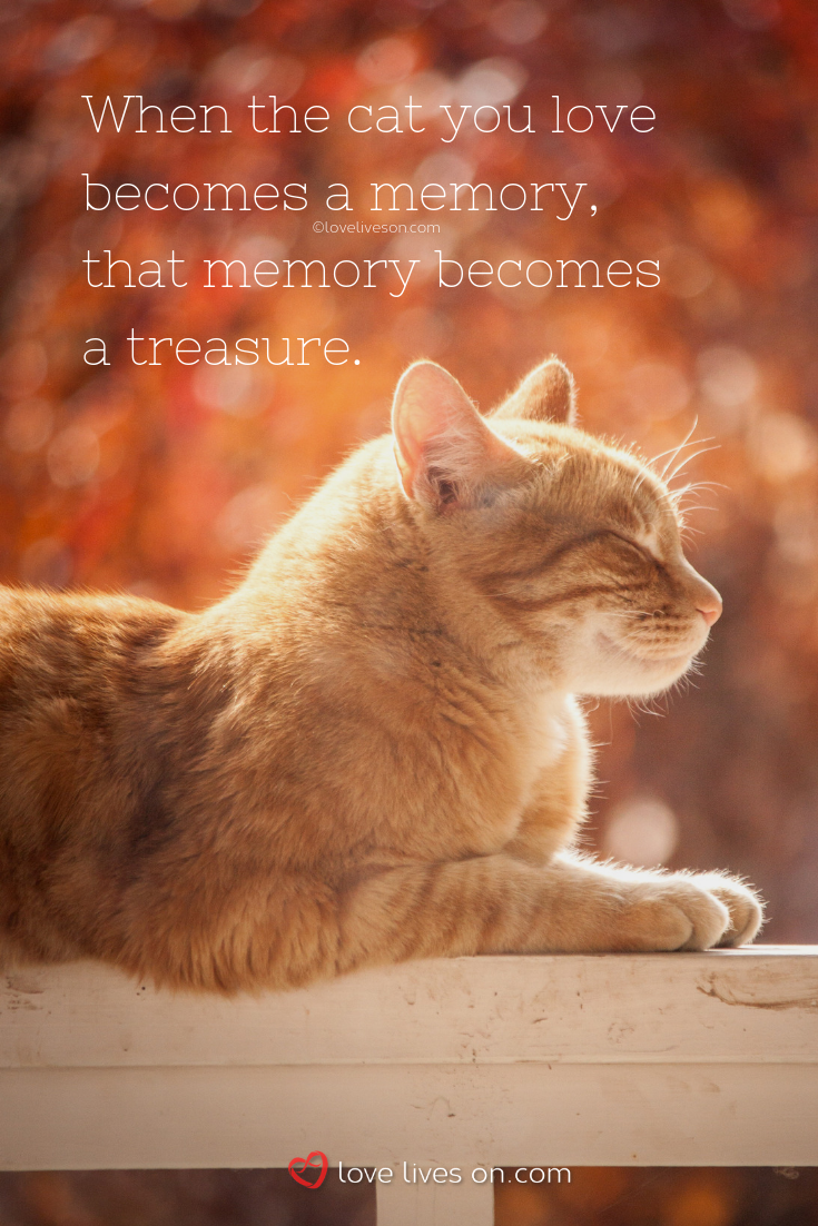 50 Beautiful Loss Of Pet Quotes Cat Quotes Funny Cat Quotes Cat Loss