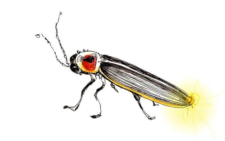 small lightning bug drawing - Google Search | Bug tattoo ...