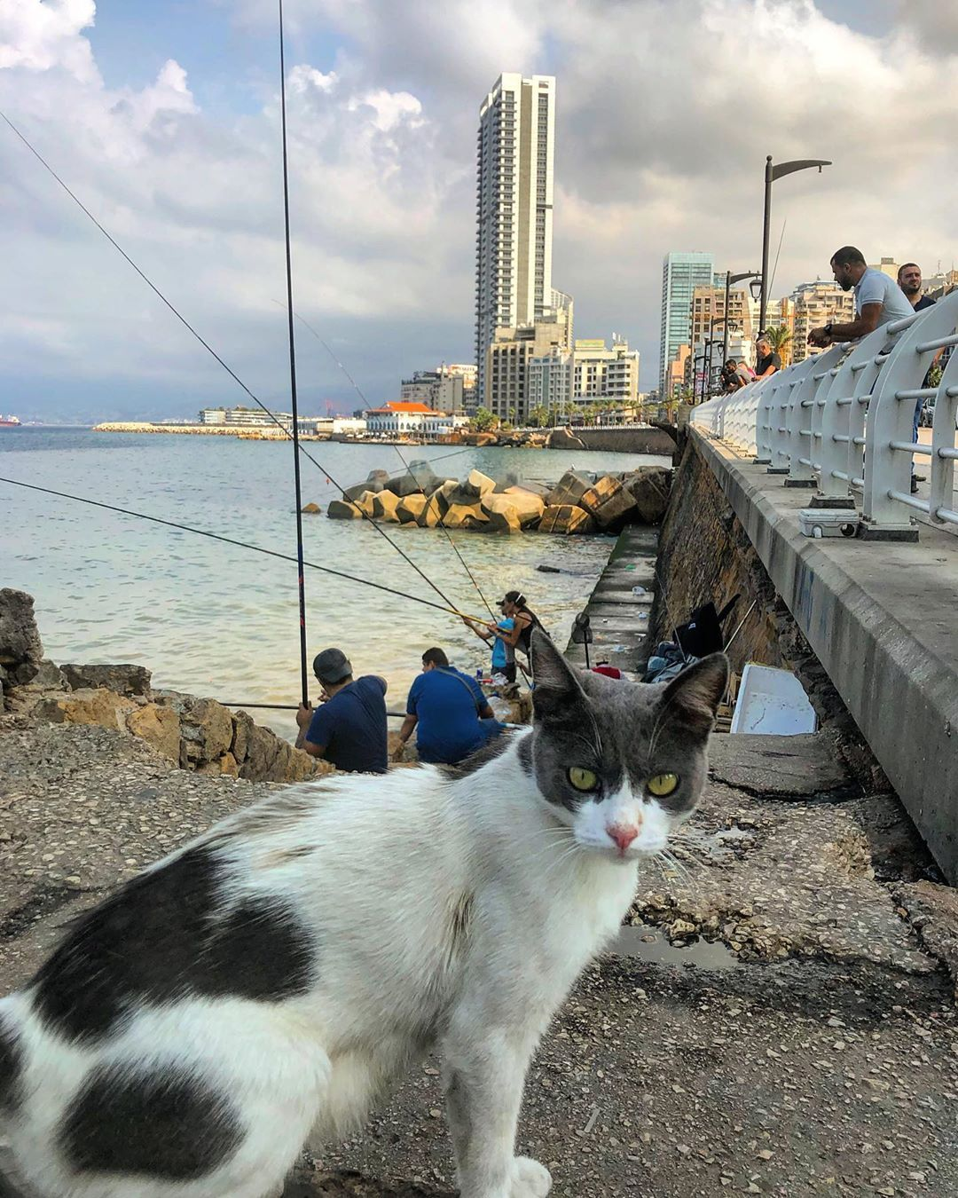 Beautiful Beirut with an adorable street cat love the whole idea of fishermen cats and the people walking there to start their day with a good walk  Love Beirut love the...