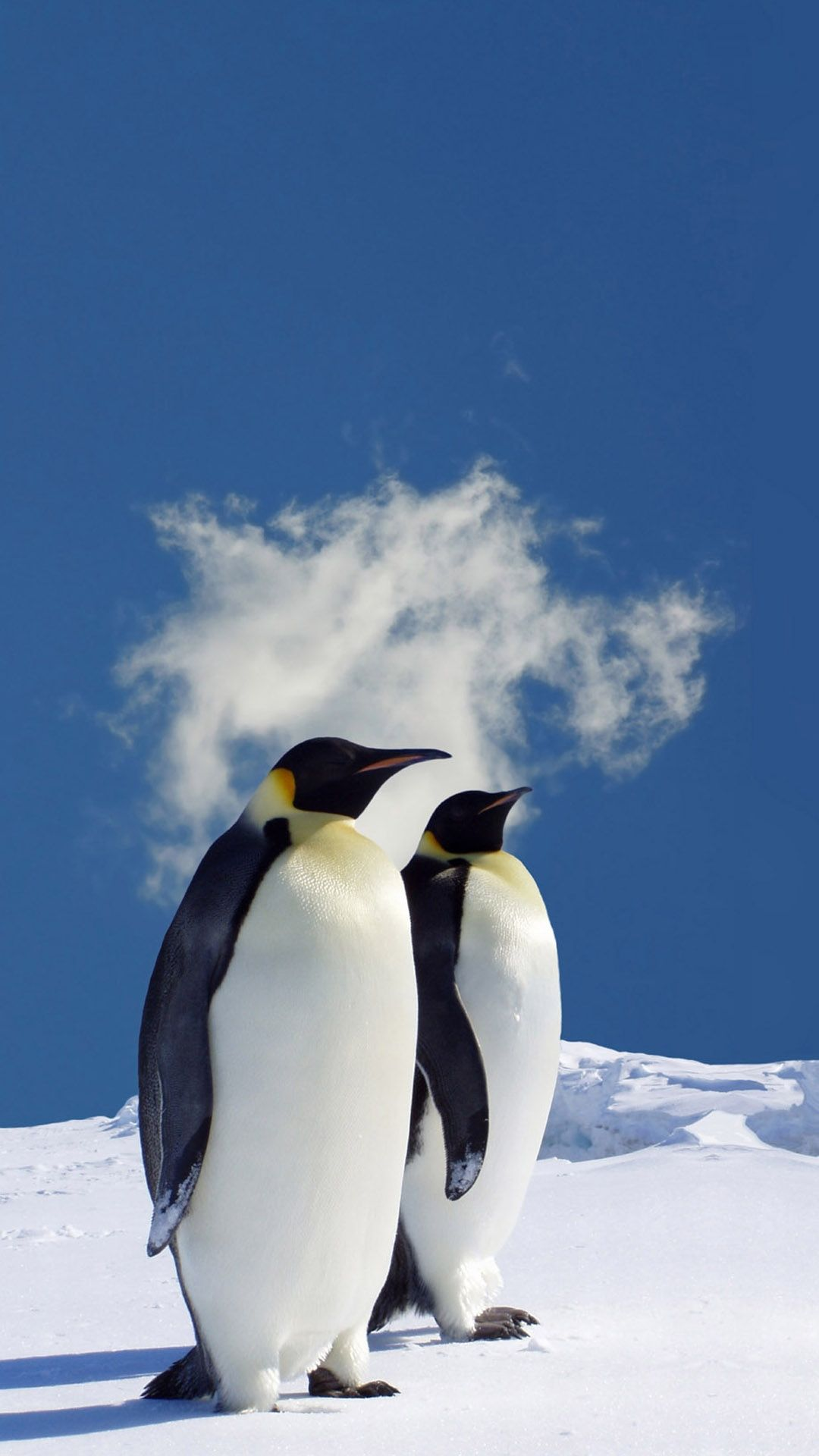 iphone wallpaper | winter wallpaper! | pinterest | penguins, animals