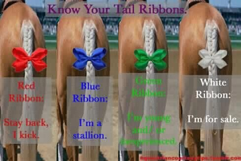 Know your tail ribbons! Red- A kicker. Blue- A stud. Green- Young and/or inexperienced. White- For sale.