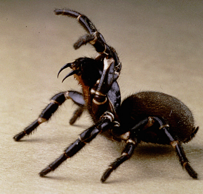 Spider Attack Position 400x383