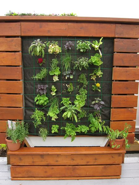 Carrot City - Carrot Green Roof | Green roof, Carrot ...