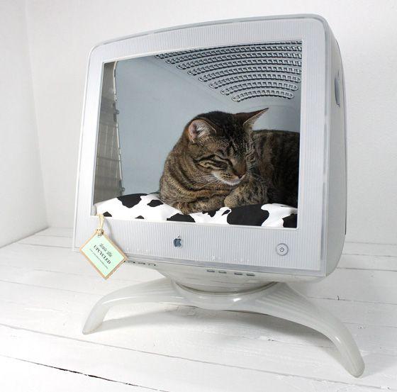 un ecran mac apple studio display en abri pour chat images objet d tourn pinterest chat. Black Bedroom Furniture Sets. Home Design Ideas
