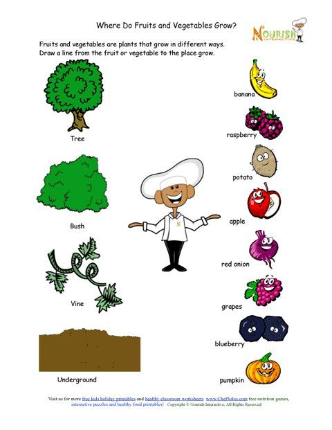 Where Do Fruits And Vegetables Grow Matching Worksheet This Would Be A Great Kids In The Kitchen Workshe Fruits And Vegetables Kids Vegetables Kids Nutrition Printable vegetable worksheets for