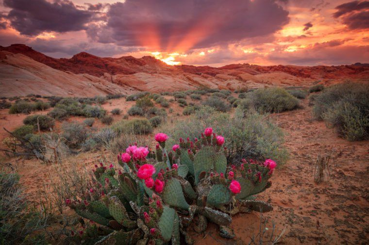 The Most Spectacular Sunset from Every State America the