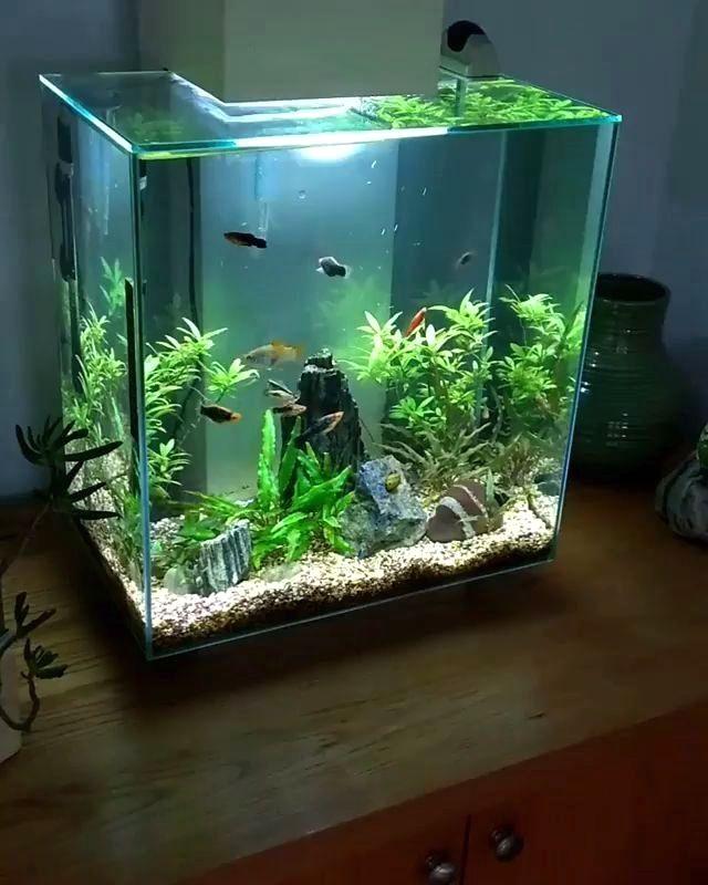 """In video using nano aquarium """"Fluval Edge 46 Litre ..."""