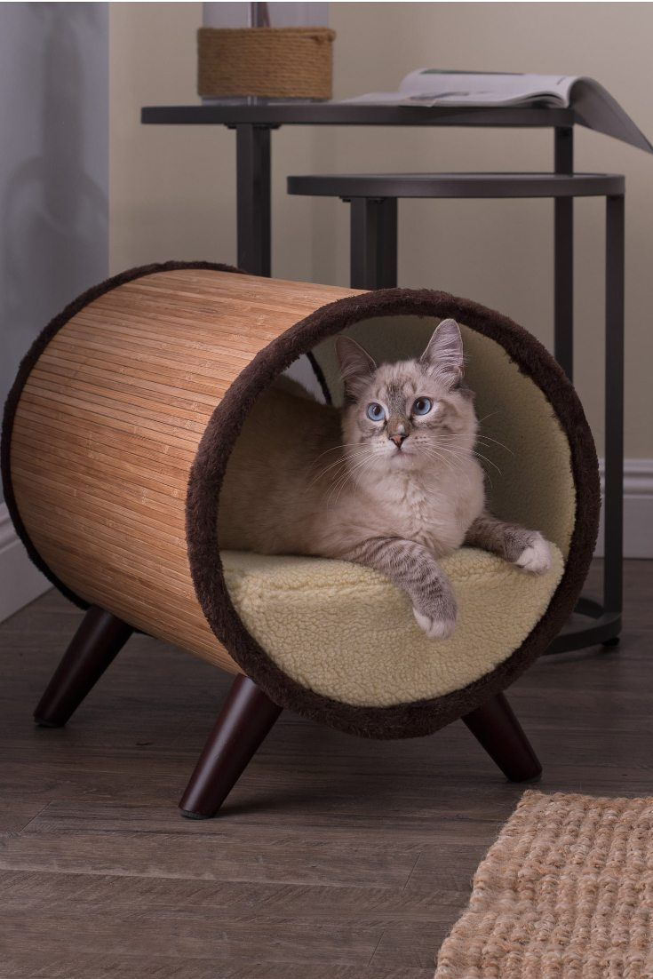 The Top 5 Places to Put Cat Beds in 2020