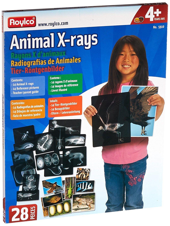 Amazon Roylco R Animal X Ray Set 8 X 10 Size